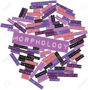 Linguistic: Morphology Penjelasan Beserta Contohnya Dalam Bahasa Inggris