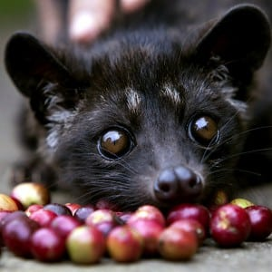 Mongoose- Kumpulan Nama Binatang Dalam Bahasa Inggris A-Z lengkap Dengan Gambar