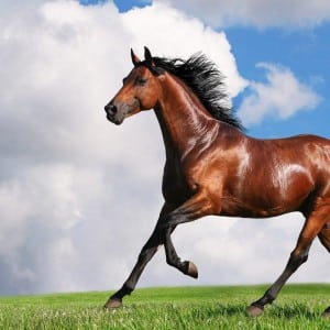 horse Kumpulan Nama Binatang Dalam Bahasa Inggris A-Z lengkap Dengan Gambar