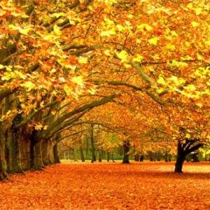 Autumn Kumpulan Musim (Season) Dalam Bahasa Inggris Dan Penjelasan Lengkapnya
