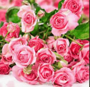 mengenal berbagai jenis bunga common scientific dalam