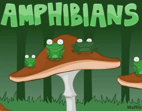 Kumpulan Binatang Amfibi (Amphibian) Dalam Bahasa Inggris Dan Penjelasannya