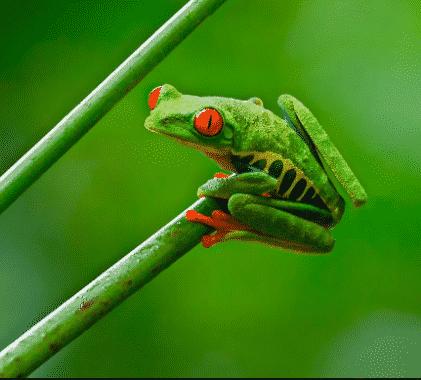 frog-katak