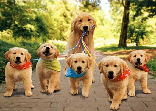 Perbedaan Kata Dog Dan Puppy Penjelasan Lengkap Dan Contoh Kalimatnya