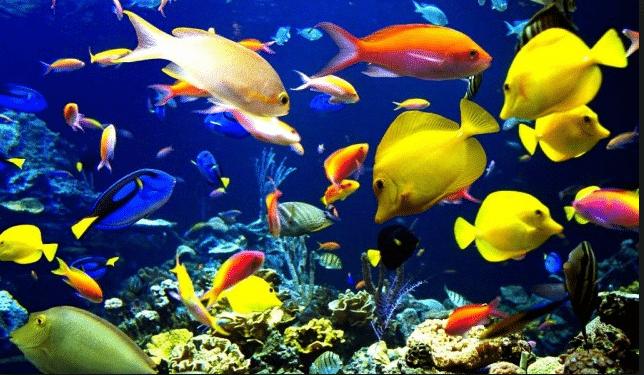 Kumpulan Nama Ikan Dalam Bahasa Inggris Dan Terjemahannya
