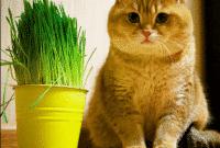 Contoh Description Text Tentang Cat (Kucing) Dalam Bahasa Inggris Dan Artinya