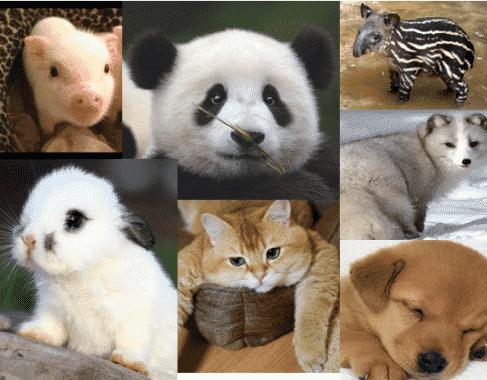1040+ Gambar Hewan Hewan Dan Namanya Gratis Terbaru