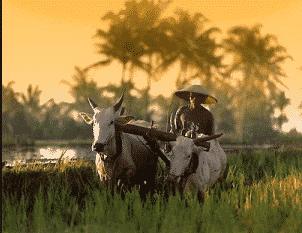 Istilah Bahasa Inggris Dalam Pertanian Dan Artinya