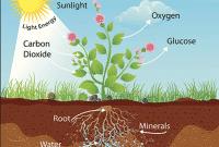 Contoh Explanation Text Tentang Fotosintesis Dalam Bahasa Inggris Beserta Artinya
