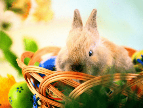 A Happy Bunny: Pengertian Dan Contoh Kalimatnya Dalam Bahasa Inggris