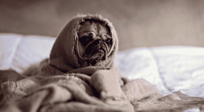 4 Cara Mengatakan Malas Bangun Dari Tempat Tidur Dalam Bahasa Inggris