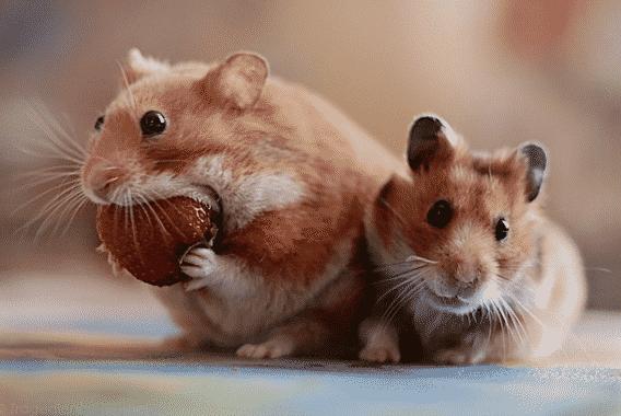 Mice VS Mouse: Perbedaan Dan Pengertiannya Dalam Bahasa Inggris