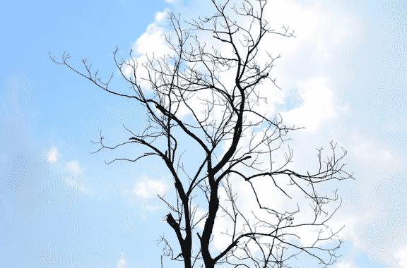 Cloud Vs Sky: Pengertian Dan Perbedaannya Dalam Bahasa Inggris