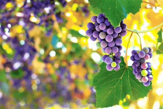 To Hear Through The Grapevine: Pengertian Dan Contoh Kalimatnya Dalam Bahasa Inggris