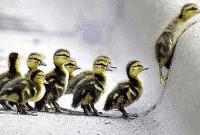 An Uphill Battle: Pengertian Dan Contoh Kalimatnya Dalam Bahasa Inggris